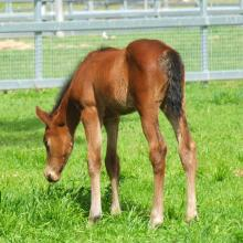 Encosta de Lago - Andallthatjazz 14 filly