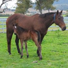 Charge Forward - Chatelaine 14 filly