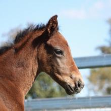 Hinchinbrook - Ultimate Rock 15 colt